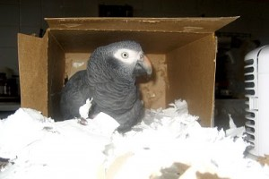 Hideaway Boxes For Your Parrot