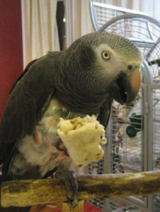 Grey Eating Vegetable Wrap