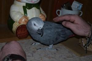 Meet Casper!