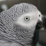 Baby After Beak Trimming