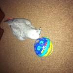 Angus Plays Ball