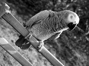 Parrot Blog